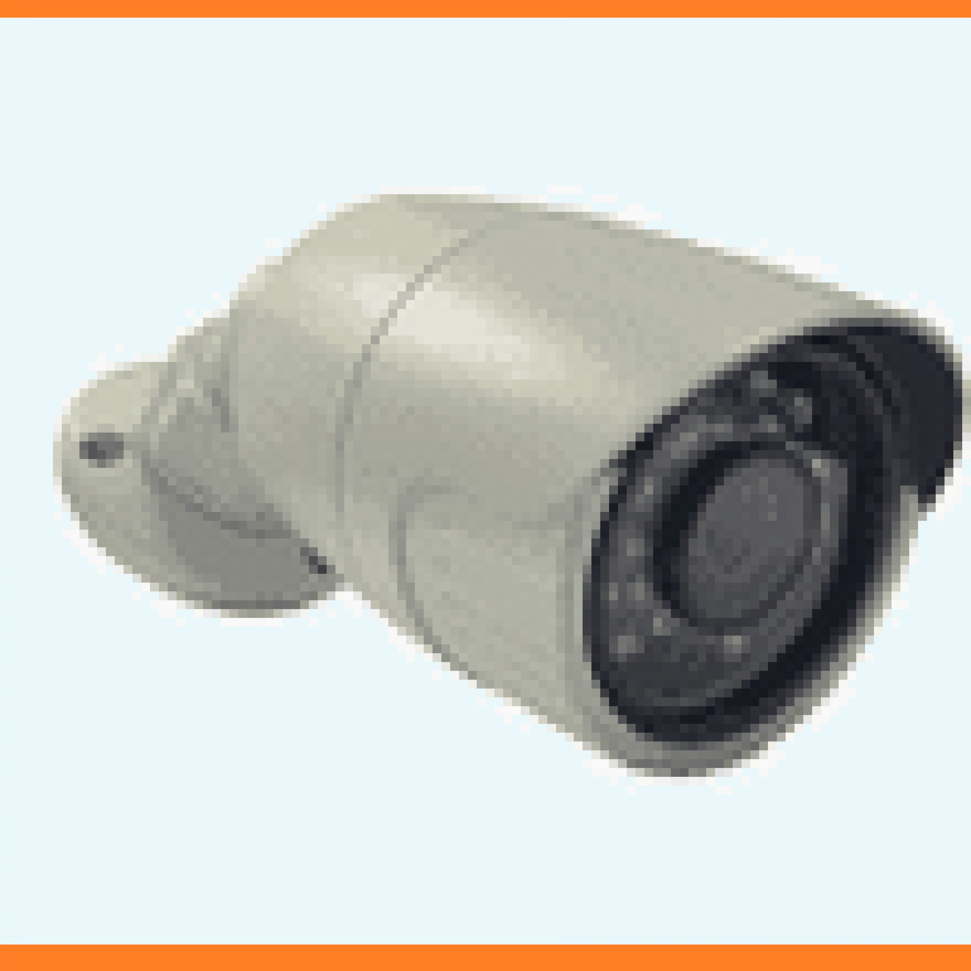 Video Surveillance and Network Video